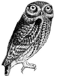 O'Reilly Regular Expression Owl